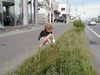 Grass2_1_1